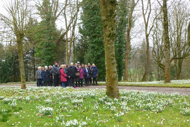 Snowdrops in Spring, Cammerton Court