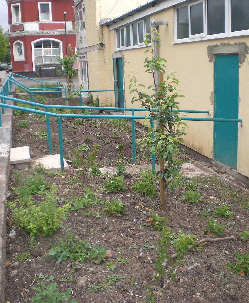 Fruit trees, bushes and herbs planted in front of the community mosque in Barton Hill