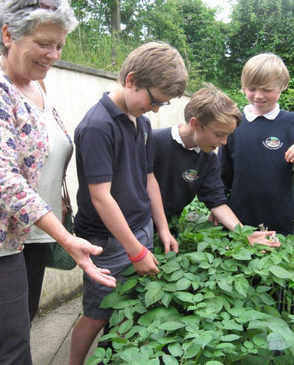 Cynthia with children and their crop of potatoes at Freshford Primary School