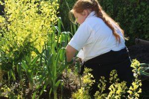 Gardening at IntoUniversity